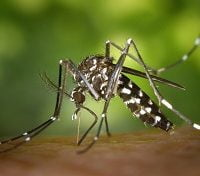 Consistent Rise of Dengue Cases in E. Visayas Alarms DOH